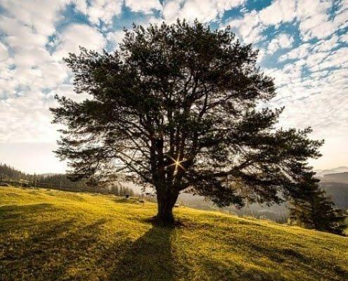 réussite maximum : 7 étapes pour transformer sa vie